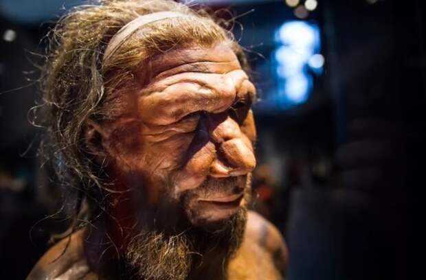 Насколько умны были неандертальцы