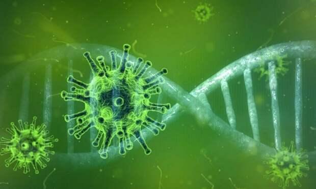 В Архангельской области за сутки выявили 59 новых случаев заражения коронавирусом
