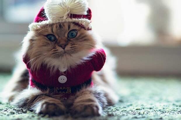 25. Кошке не надо покупать наряды, она всегда красива и без одежды. жены, интересное, кошки, юмор