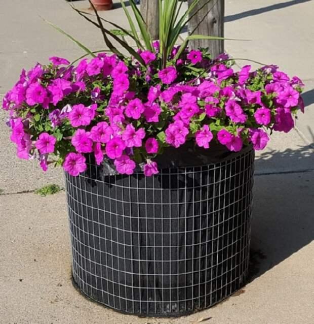 Цветник возле дома: 45 восхитительных идей