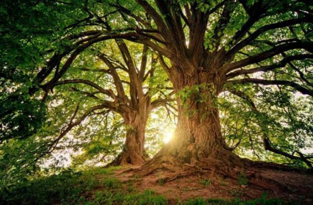 Послание к людям от самого высокого дерева в Уэльсе (ФОТО)