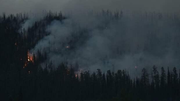 Окрестности Тюмени охватил мощный лесной пожар