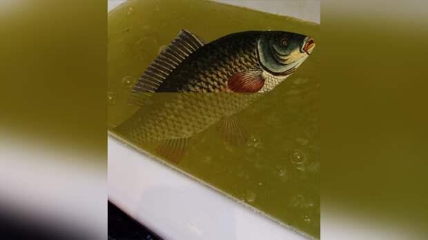 Вода сзапахом рыбы течет изкранов вРостове