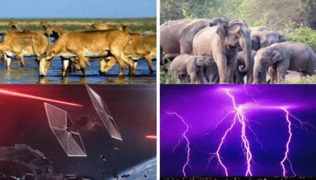 Что убило 18 слонов и 350 антилоп? Молния? Космические бои?
