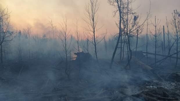 Запрет на посещение лесов срочно введен в Пермском крае
