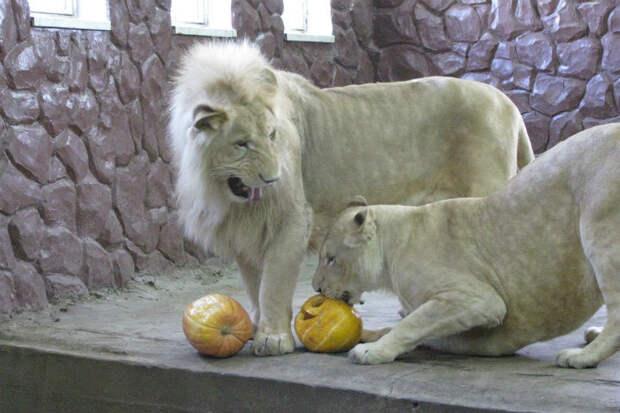 Сотрудники красноярского зоопарка ко Дню святого Валентина сделали видео с влюбленными животными