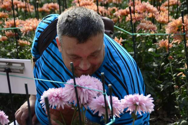 Самый красивый «танец» хризантем можно увидеть в Ялте