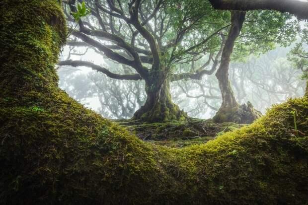 15 живописных фото мистического леса на острова Мадейра