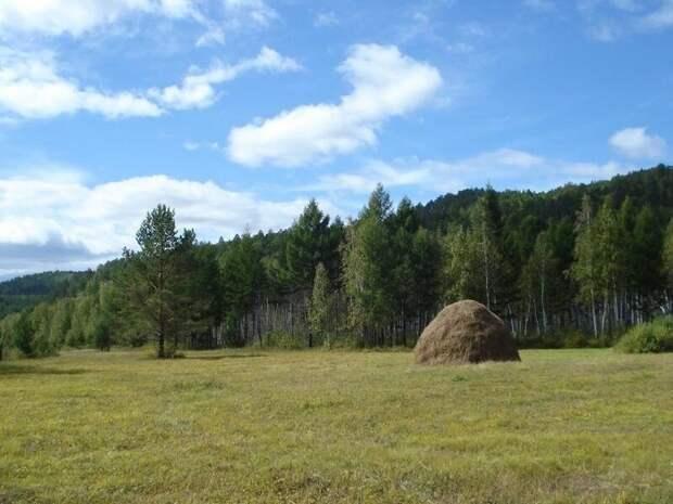 Российским дачникам запрещен самовольный захват земли