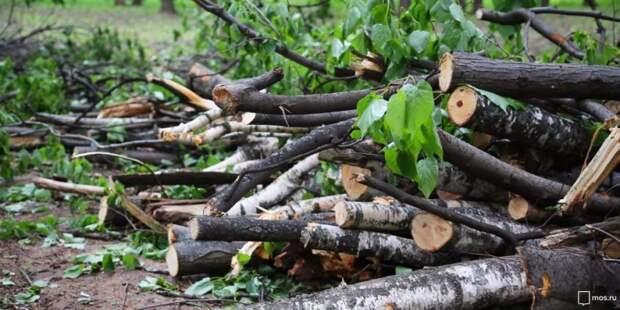 Со Скаковой аллеи вывезли ветки деревьев