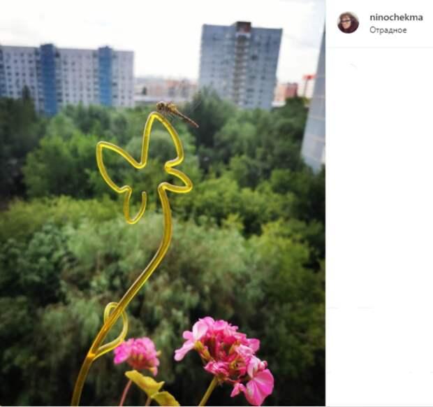 Фото дня: стрекоза залетела в гости к жительнице Отрадного