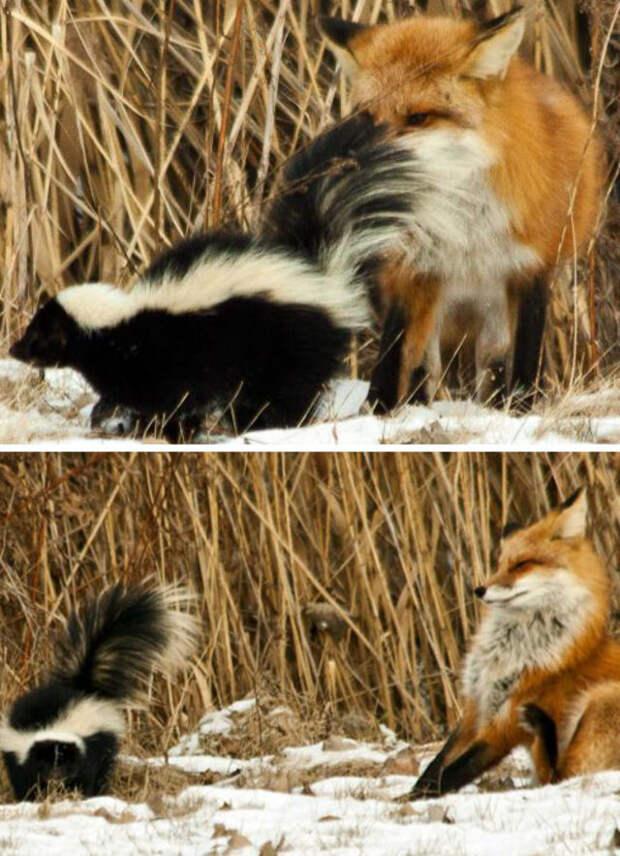 Эти смешные животные точно переоценили свои возможности