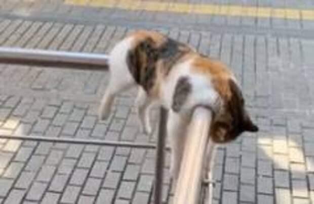Стамбульский кот покорил соцсети