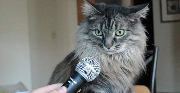 Ирландская кошка сама рассказала хозяйке о самом главном twitter, главное, интервью, ирландия, кошка, новости