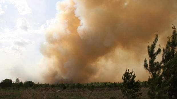 Предполагаемый виновник лесного пожара в Якутии задержан