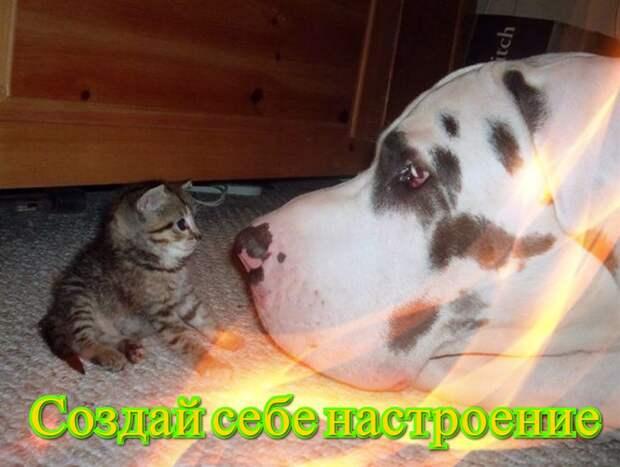 Позитив от Михалыча - создай себе настроение