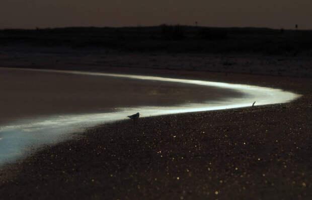 Восточно-Фризские острова, Германия Ночью вода вблизи берега у Восточно-Фризских островов переливается сине-зеленым свечением, испускаемым светящимся планктоном.