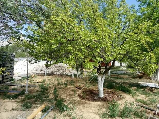 История с зеленым сквером в 14 микрорайоне Актау получила продолжение