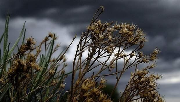Штормовые порывы ветра ожидаются в Подмосковье 17 мая
