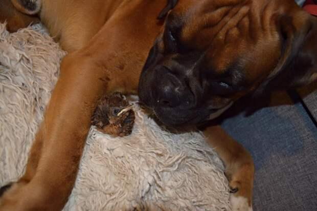 Как пёс спас маленького птенца и стал ему лучшим другом! Невероятно добрая история…