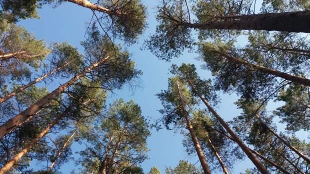 Израненного ягдтерьера бросили на голодную смерть в нижегородском лесу