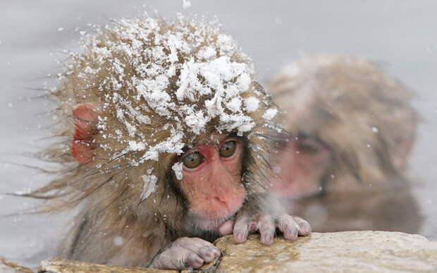 К зиме готовы