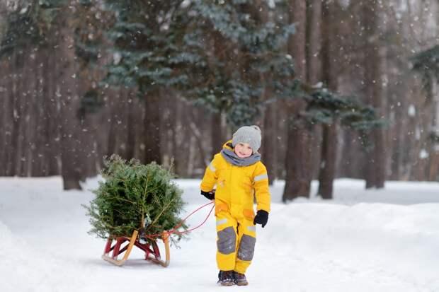 Жителям Удмуртии рассказали, как выбрать новогоднюю елку