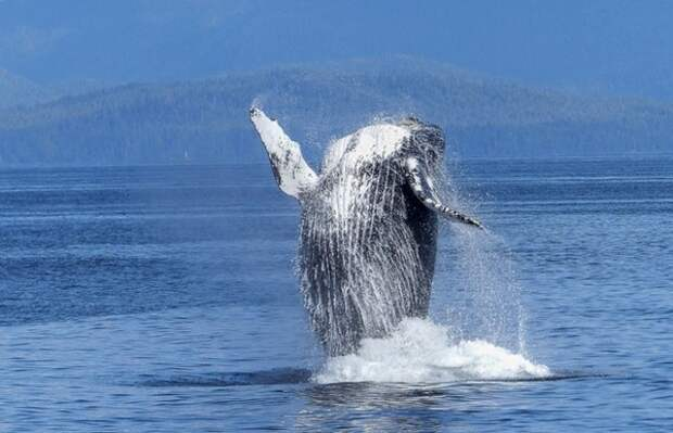 В Японии более 80 человек пострадали после столкновения катера с китом