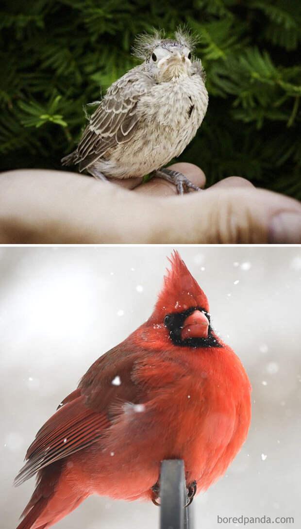 Как выглядят птенцы 57 разных видов птиц