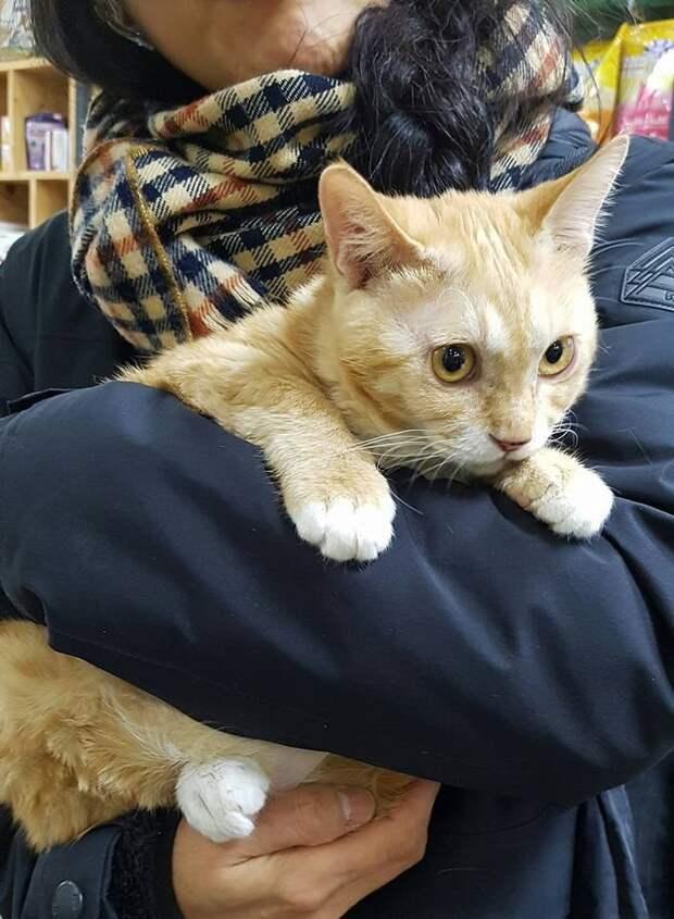 Котёнок был настолько голоден, что ел ГРЯЗЬ! Но теперь он в надёжных руках…