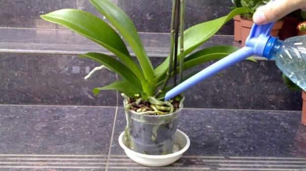 Полив орхидей из лейки