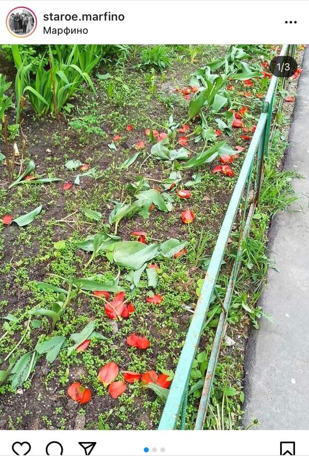 Неизвестные на Академика Королева атаковали клумбу с тюльпанами