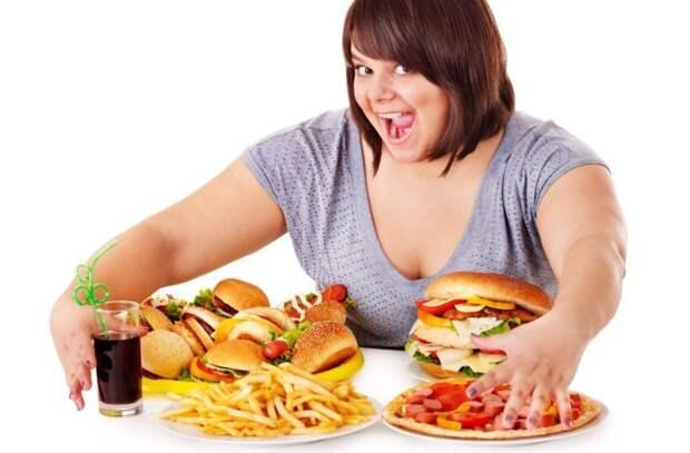 Фастфуд ни при чем! Найдены бактерии, вызывающие ожирение - Hi-News.ru