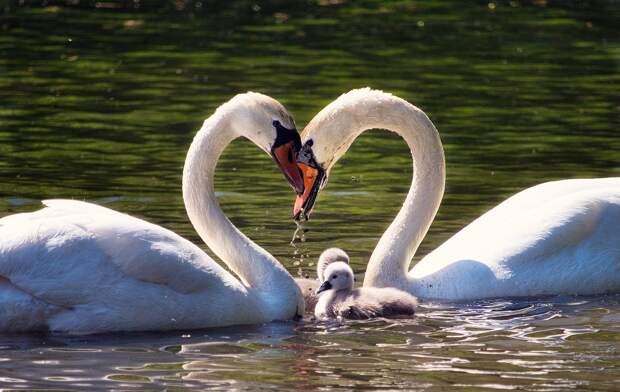 Семья, дети, вечные ценности