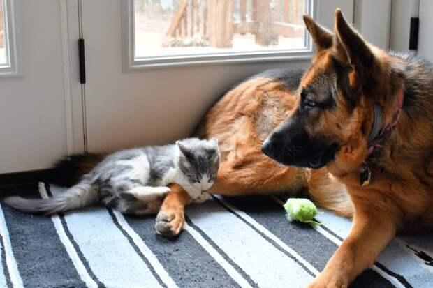 Ветеринары в Ижевске обеспокоены ростом заболеваемости бешенством