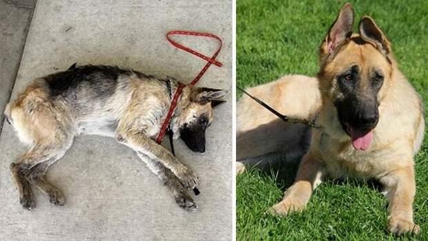 Истории спасения собак, находящихся на грани смерти