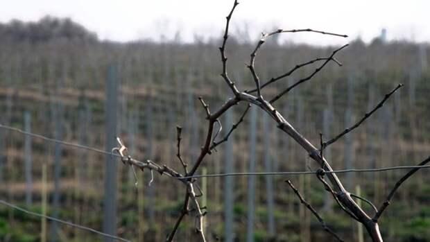 Севастополец «кинул» знакомого виноградаря на 110 тысяч рублей