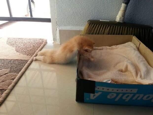 Котенок расслабился чуть раньше, чем собирался животные, расслабленность, смешно, фото