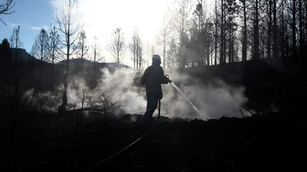 Климатологи доказали сокращение количества лесных пожаров с 18 века