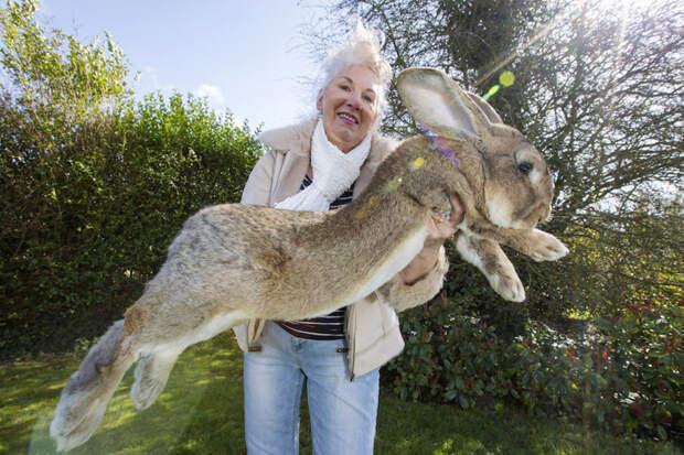 Это Дарий. Он весит 22 кг, и он самый большой кролик в мире. жизнь, интересные, фото