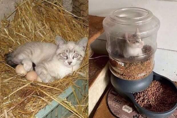 10+ смешных фото кошек, которые выбирают самые необычные места для отдыха