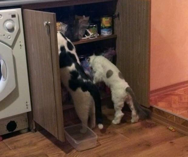 Два котика-бомжика, которым повезло
