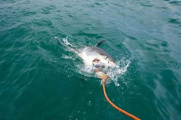 Взгляд на вещи в перспективе акулы, факты, хищники