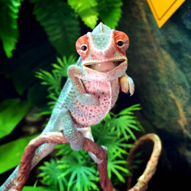 cute-baby-chameleons-63-5835d8bd37740__700
