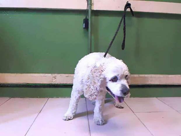 История о 20-летнем псе, которого владельцы сдали в приют