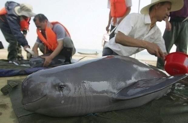 Плачущий дельфин, которого спасли от сетей животные, коты, милота