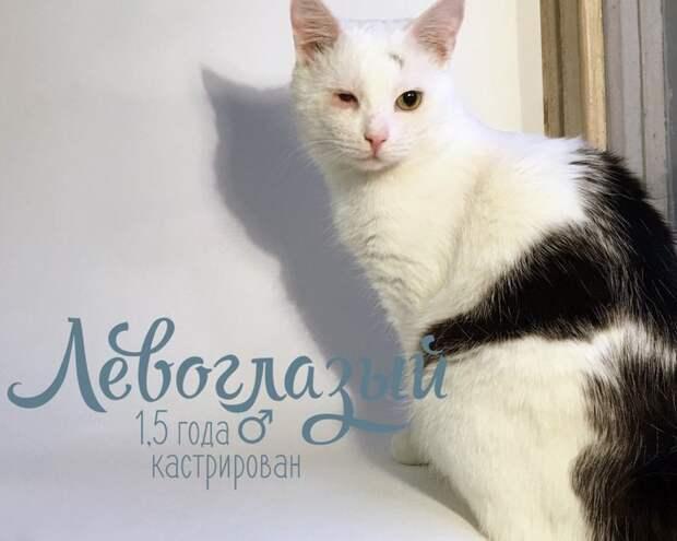 «Коты, проблемные, 21 штука. Берём!» Эта удивительная питерская история бьёт в самое сердце…