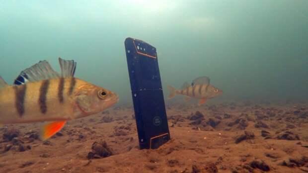 Реакция рыбы на музыку, вибрацию. Подводная съемка.