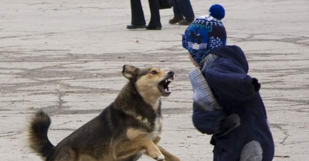 В Туле бездомная собака напала на ребенка