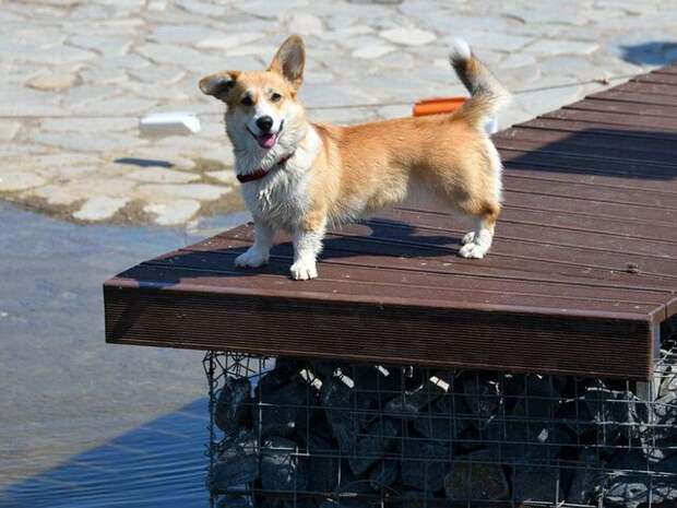 Ветеринар перечислил опасности для домашних животных в жару